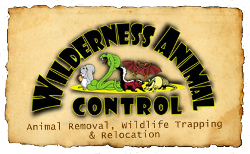 wilderness animal control