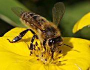 get rid of bees - bee removal in Houston, Austin, Dallas, Fort Worth