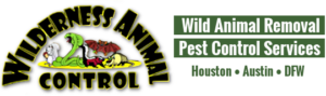 wilderness animal control - wild animal removal - pest control services - houston, austin, dallas, fort worth